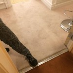 End of Tenancy cleaning project in Camden London by Sunny Clean 22